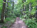 Fruška gora - šumska staza u proleće.jpg