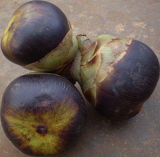 Borassus flabellifer - Fruits of Borassus flabellifer, Vietnam.