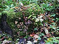 Fungi galore, Wallington - geograph.org.uk - 1585464.jpg