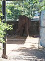 Ganga (temple elephant) .jpg