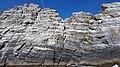 Gannets on Little Skellig 02.jpg