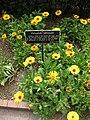 Gardenology.org-IMG 5233 hunt0904.jpg