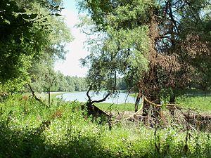 Tolna County - Image: Gemenci erdő Lassi 1414