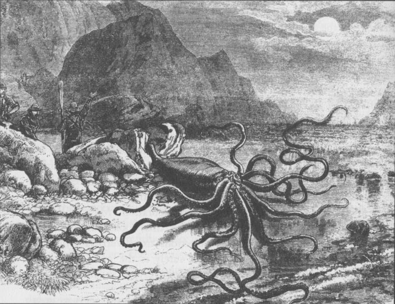 archivogiant squid catalinapng wikipedia la