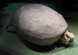 Spesimen fosil Glyptodon di National Museum of Natural History, Washington, DC