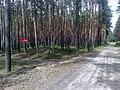 Gmina Pysznica, Poland - panoramio (6).jpg