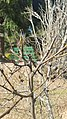 Godawari Botanical garden 24.jpg
