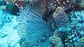 Gorgonian and Sponges.jpg