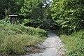 Gozd panovec (5).jpg