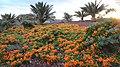 Granadilla de Abona, Santa Cruz de Tenerife, Spain - panoramio (9).jpg