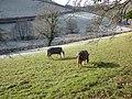 Grazing ponies, near Little Silver - geograph.org.uk - 1626011.jpg