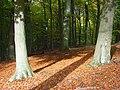 Great Wood, Fawley - geograph.org.uk - 1032902.jpg