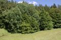 Grebenau Grebenau NR 165502 Schwarzenbachsgrund Schwarzenbach Meadow.png