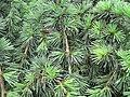 Green (14219555394).jpg