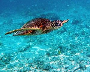 Sea Turtle Manual Embroidery Design