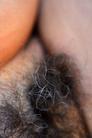 Grey Female Pubic Hair.png