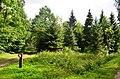 Gringalių miškas.JPG