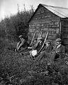 Group of fowlers resting YORYM-S29.jpg