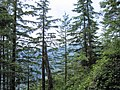 Forestry - Wikipedia, the free encyclopedia