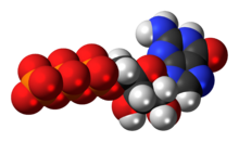 Space-filling model of the guanosine triphosphate anion
