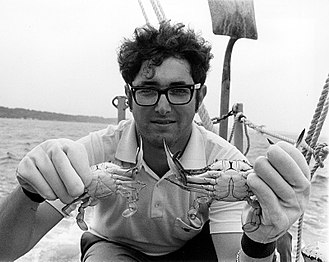 Callinectes sapidus - Male and female Maryland Blue Crab being held by a scientist in 1972.