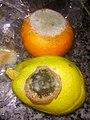 HK 生果 Fruits 發霉 Mold 柑桔 orange 梨 Pear Feb-2018 Lnv2 05.jpg