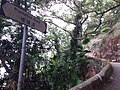 HK 香港 VP 維多利亞山頂 Victoria Peak Findlay Road 種植道 Plantation Road 白加道 Barker Road April 2020 SSG 08.jpg