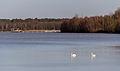 Haltern am See, Silbersee III -- 2014 -- 9.jpg
