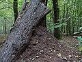 Hambach forest 08.jpg