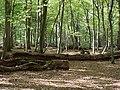 Hambach forest 42.jpg