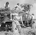 Harvesting at Mount Barton, Devon, England, 1942 D10334.jpg