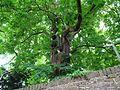Haus Koekkoek Kleve Garten PM15 07.jpg