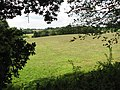 Hay meadow south of New Inn Hill - geograph.org.uk - 1433471.jpg