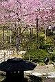 Heian Jingu Garden (3485233650).jpg