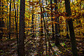 Herbst in Thueringen-Hainich-1.jpg