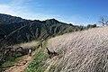 Hiking Towsley Canyon (2324737886).jpg