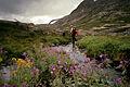 Hiking in the White Pass (9668158149).jpg