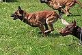 HiperParada animalelor la CORA (4548498349).jpg