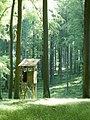 Hochsitz im Wald beim Wattkopf - geo.hlipp.de - 19002.jpg