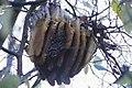 Honeycombs by country Bienenwaben Styria 02.jpg