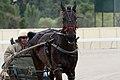 Horse Trotting (6700571287).jpg