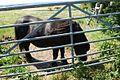 Horse in Aughton 2.jpg