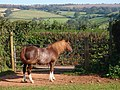 Horse near Luton Cross - geograph.org.uk - 987963.jpg