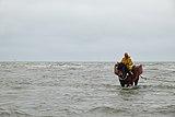 Horse shrimpers of Oostduinkerke (DSCF9740).jpg