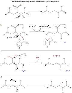 IDHcatalyticmechanism.jpg