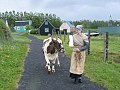 IMG Cow and farmhand2.JPG
