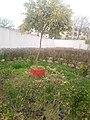 IMG jardin.jpg