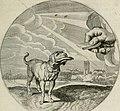 Iacobi Catzii Silenus Alcibiades, sive Proteus- (1618) (14749620055).jpg