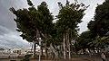 Icod de los Vinos, Santa Cruz de Tenerife, Spain - panoramio (28).jpg
