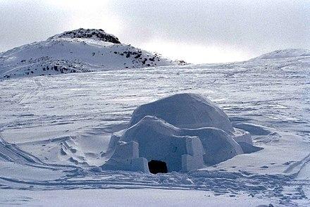 schnee robbe lebens weise
